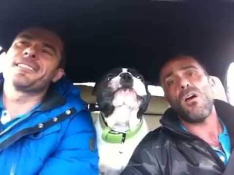 Bulldog Sings You Raise Me Up