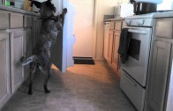 Clever Dog Has an Incredible and Useful Trick