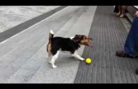 Clever Dog Plays Fetch with Himself
