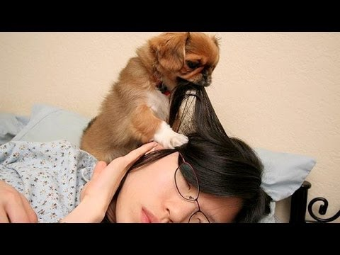 Cute Dogs Waking Up Owners