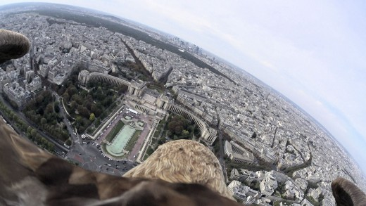 Eagle Flying Over Paris