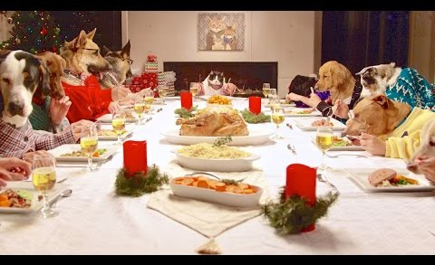 Festive Dinner Party with 13 Dogs and One Cat