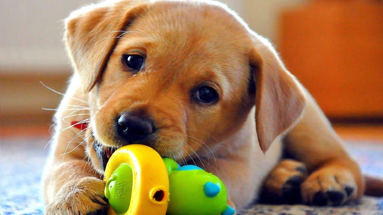 Funny Dog Videos – 2