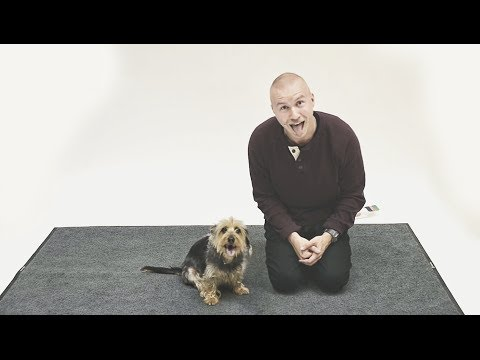 How Dogs React to Human Barking?