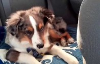 Puppy Wakes Up And Sings Along To 'Let It Go'