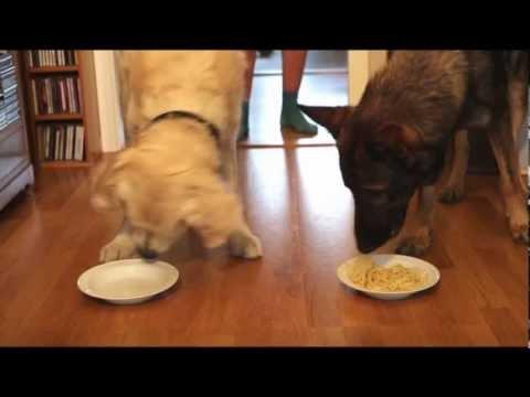 Spaghetti Eating Competition: Golden Retriever vs German Shepherd