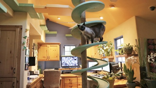 This Man Turns His House Into Indoor Cat Playland