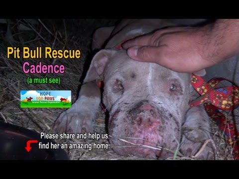 This Pit Bull Shows Us the Power of Second Chances