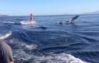 Amazing: Women wakeboards with Dolphins