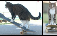 Didga the Talented Skateboarding Super Cat