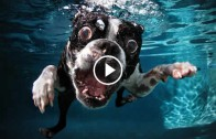 Dogs in Slow Motion – 1000fps
