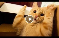 Funny Videos of Funny Animals Compilation