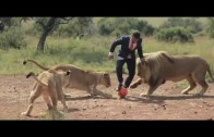 Lion Whisperer Kevin Richardson Plays Football with Wild Lions