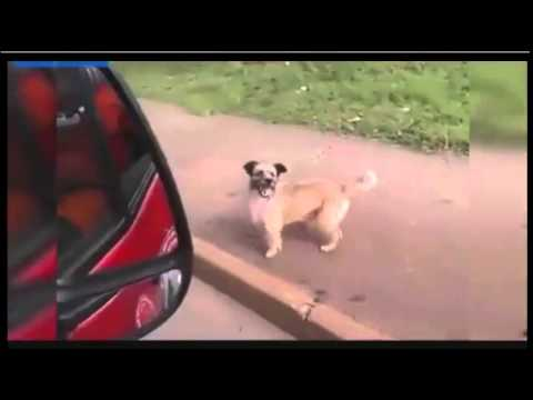 Man's Best Friend Chases Ambulance With Owner Inside