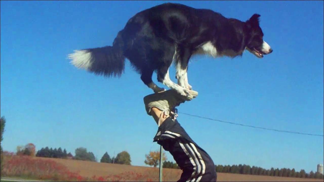 Nana the Border Collie Performs Amazing Dog Tricks