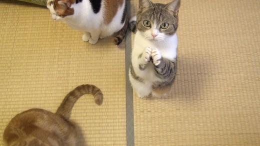 This Cute Cat Beg for Fish Treats