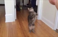 Smart Cat Can Find the Ball Under the Cup
