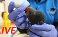 Livestream of a Tiny Newborn Bear Cub Cuddling His Teddy Bear