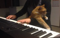 Cat Interrupts Girl's Piano Playing