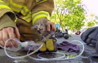 Firefighter Rescues a Kitten From a Burning House
