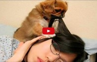 Compilation of Dogs Waking Up Their Owners