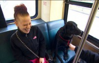 Labrador Rides Seattle Bus to Dog Park All by Herself