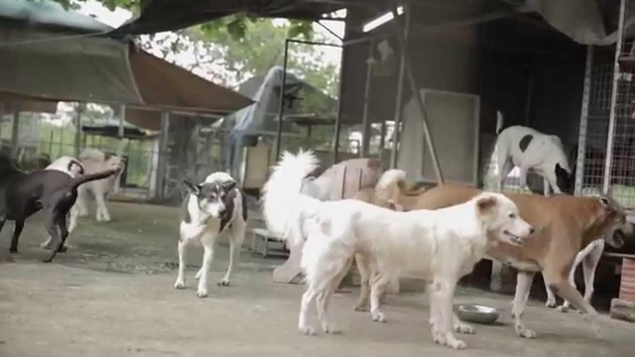 Prankster Dog Scares Cats